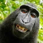 Monkey Flix