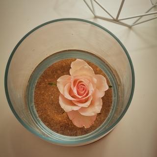 Elena profile picture