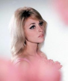 Photo of Sharon Tate