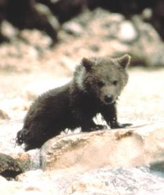 Photo of Youk the bear