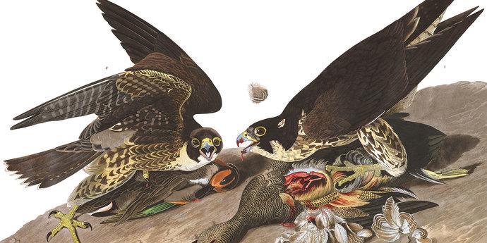 "image of the Sérgio Da Costa & Maya Kosa Introduce Their Film ""Bird Island"""